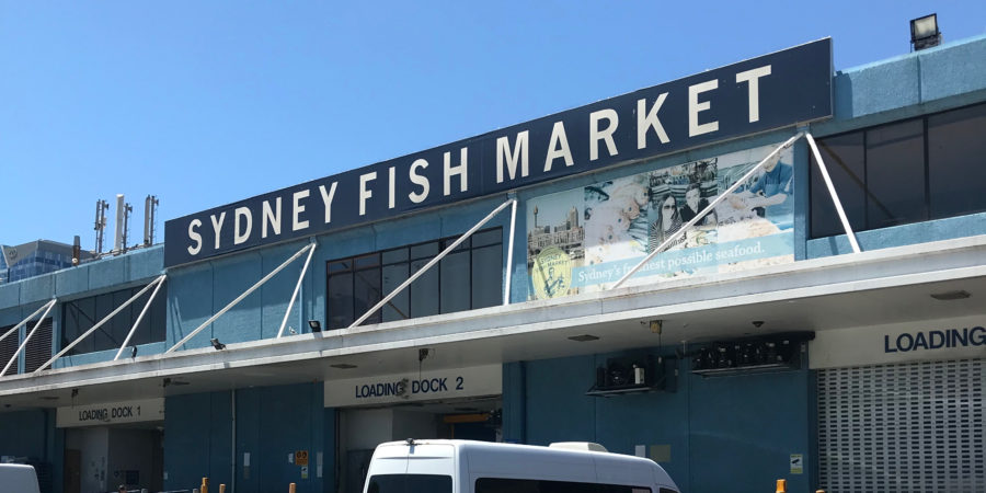 sydney fish market 9 - revised